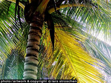 Propeller Island Galerie Travel Country Tobago palms in light